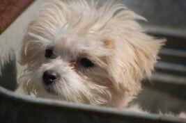 Gechippte Hunde sind mit RFID-Transpondern ausgestattet.
